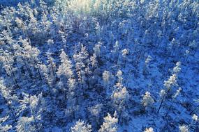 航拍大兴安岭冬季雪原树林雾凇
