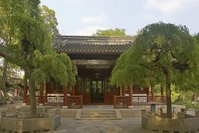 上海古猗園逸野堂和庭院龍爪槐