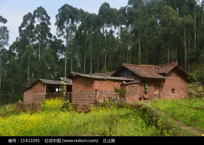 山区乡村农家庭院和油菜花图片