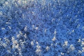 航拍大兴安岭冬季树木雾凇