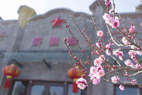 景观入口粉色梅花