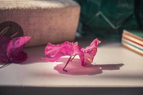 桌面叶子花