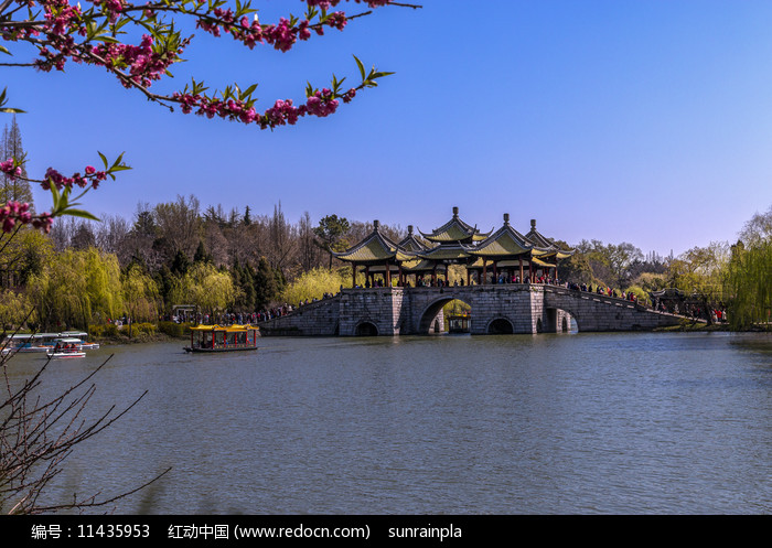 春天的瘦西湖五亭桥风光图片