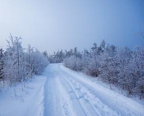冬天树林雪路