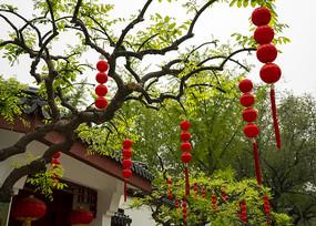 公园里树上的红灯笼