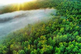 大兴安岭绿色树林晨雾朝阳