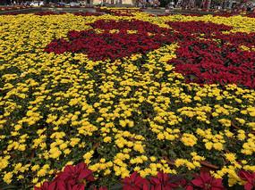 海防广场菊花