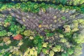 航拍大兴安岭丛林秋景