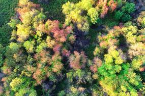 航拍大兴安岭密林红叶风景