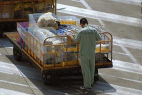 上海浦东机场空运宠物狗拖车