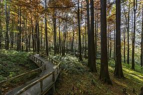 波尔登森林公园摄影图