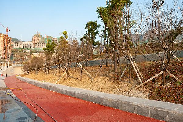 三峡水库之巫山库岸景观绿化带