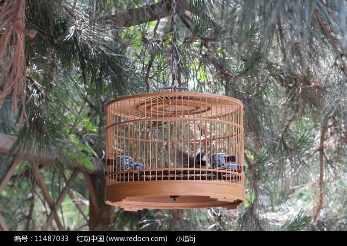鸟笼子 图片