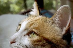一只在花丛中练习捕猎的三花猫