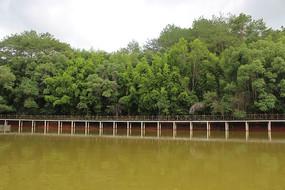 湖水旁风景