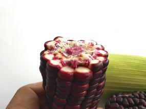 白色背景上的紫玉米