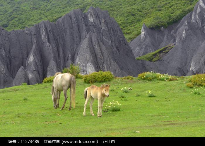 四川墨石公园土石林和马 图片