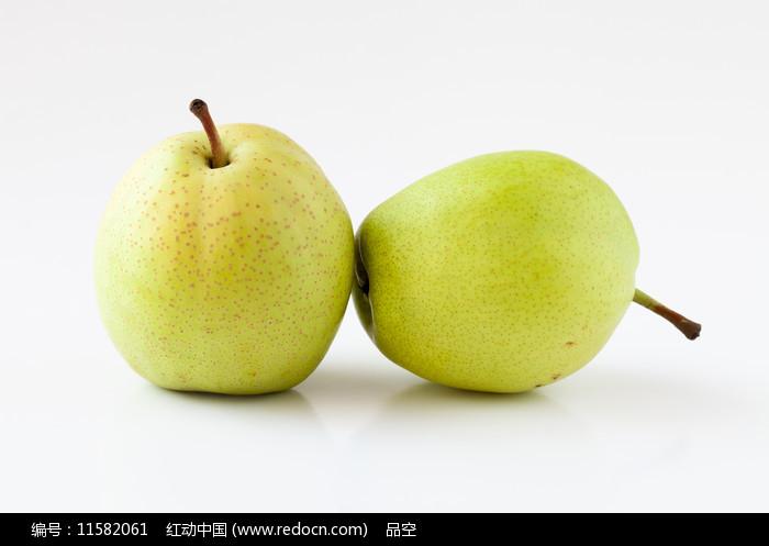 白背景上的两个早酥梨图片