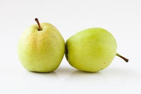 白背景上的两个早酥梨