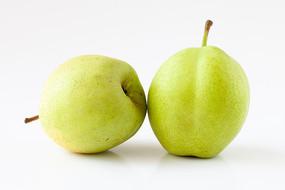 白背景上的应季水果早酥梨