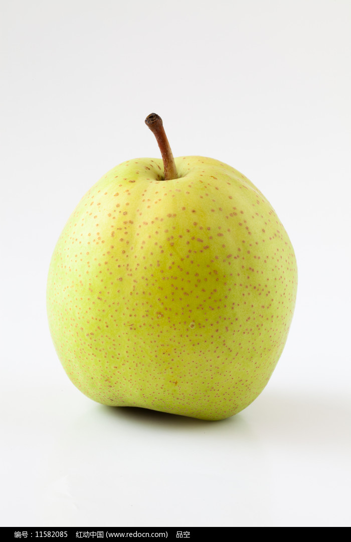 白背景上的一只早酥梨图片