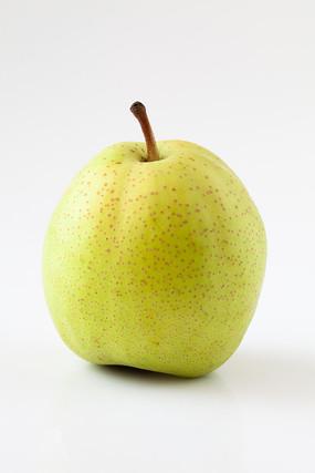 白背景上的一只早酥梨