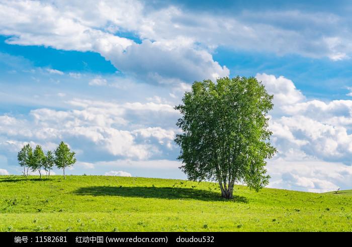 河北塞罕坝草原大树图片