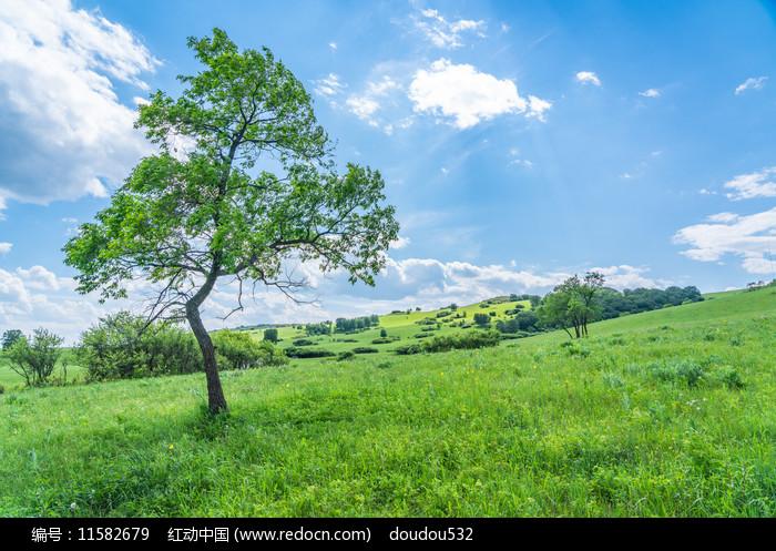 河北塞罕坝绿树图片
