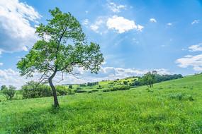 河北塞罕坝绿树