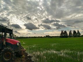 清晨阳光稻田