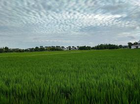 乡村清晨美景