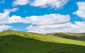 锡林郭勒草原风景