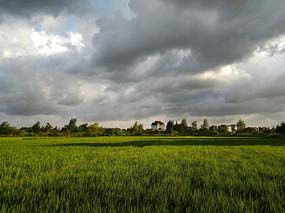 风云天金色稻田