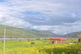 甘孜炉霍县春天乡村的油菜花