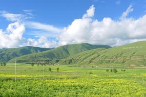 四川霍县-高原春天的油菜花