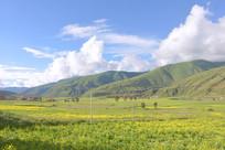 四川炉霍县春天原野的油菜花