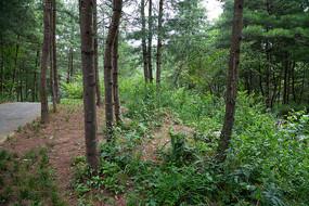 重庆市巫山县摩天岭绿色森林