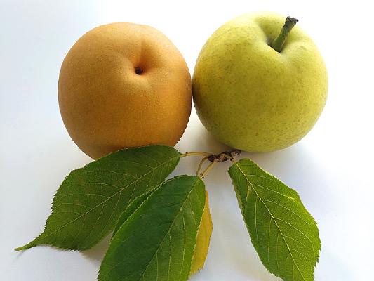 黄梨苹果梨图片