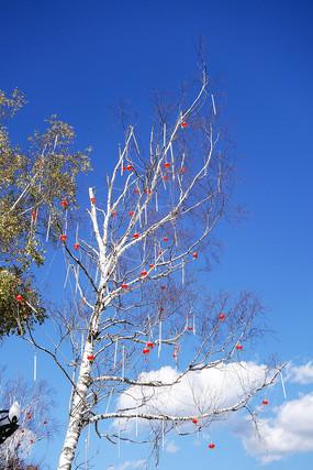 亚布力旅游景区白桦树红灯笼