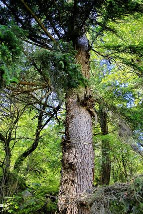 原始森林九寨沟