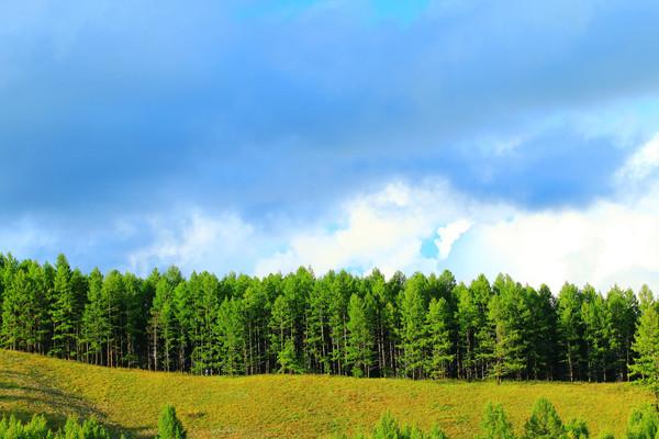 大兴安岭松林风景