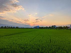彩霞田野村庄