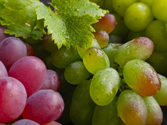 有机绿色鲜葡萄