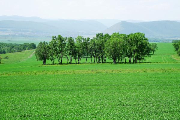 绿色原野树林