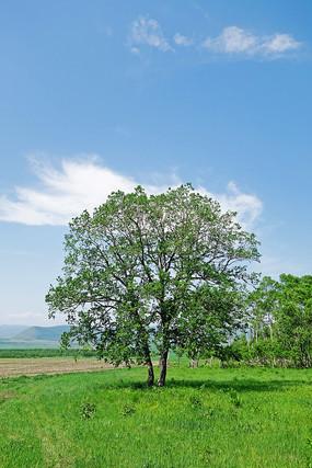 绿色原野树木风景