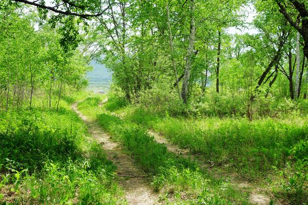 绿色原野小路