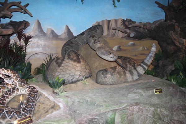 响尾蛇动物模型
