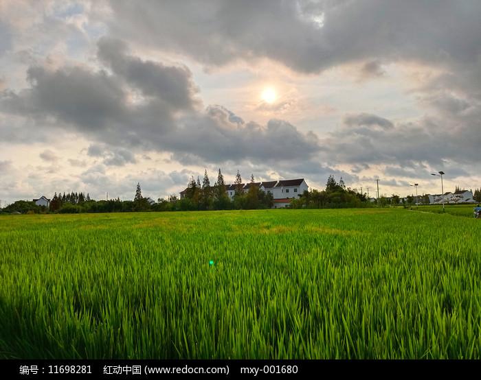稻田乡野景色图片