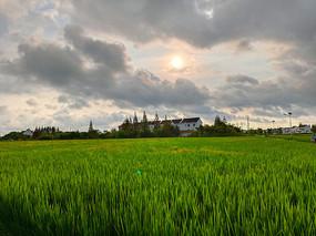 稻田乡野景色