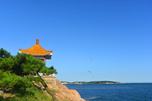 青岛太平湾海岸凉亭和飞翔的海鸥